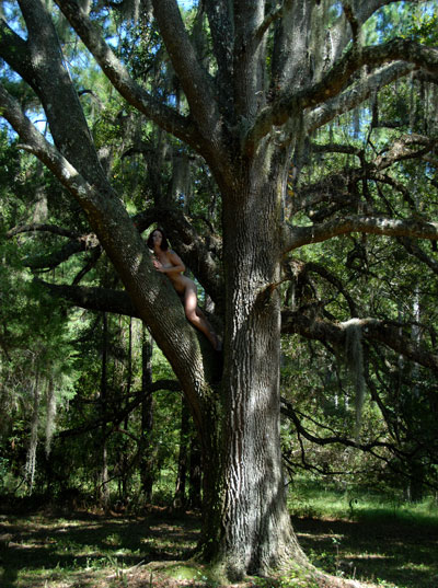 D20 4175 Fayth Up A Tree